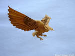 Elegant Origami Eagle