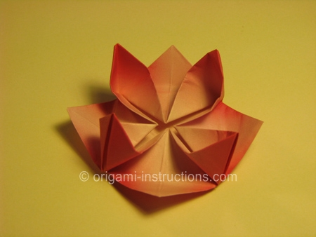 Delicate Origami Water Lily